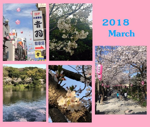 桜2018.jpg